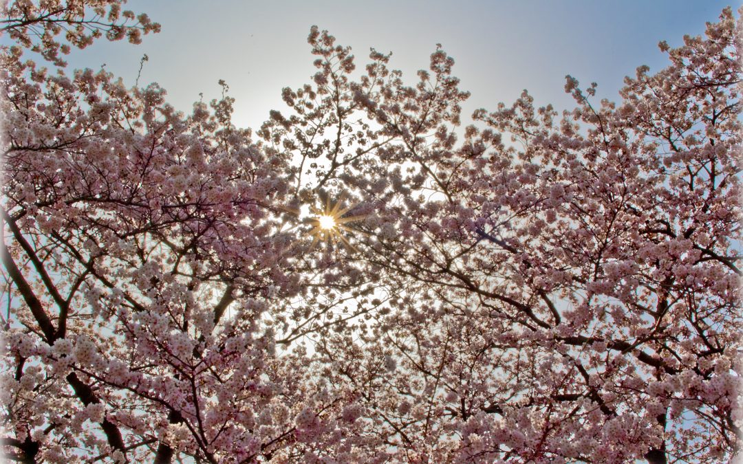 The Path to Peace: a Holy Week Meditation